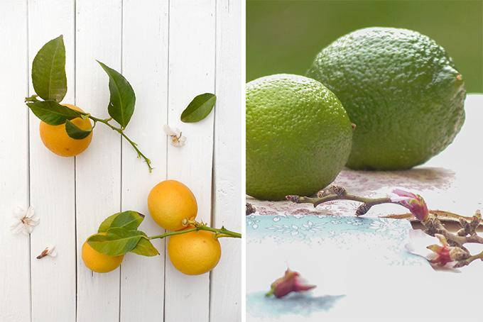 Le citron son histoire et ses propri t s - Quand cueillir les citrons ...