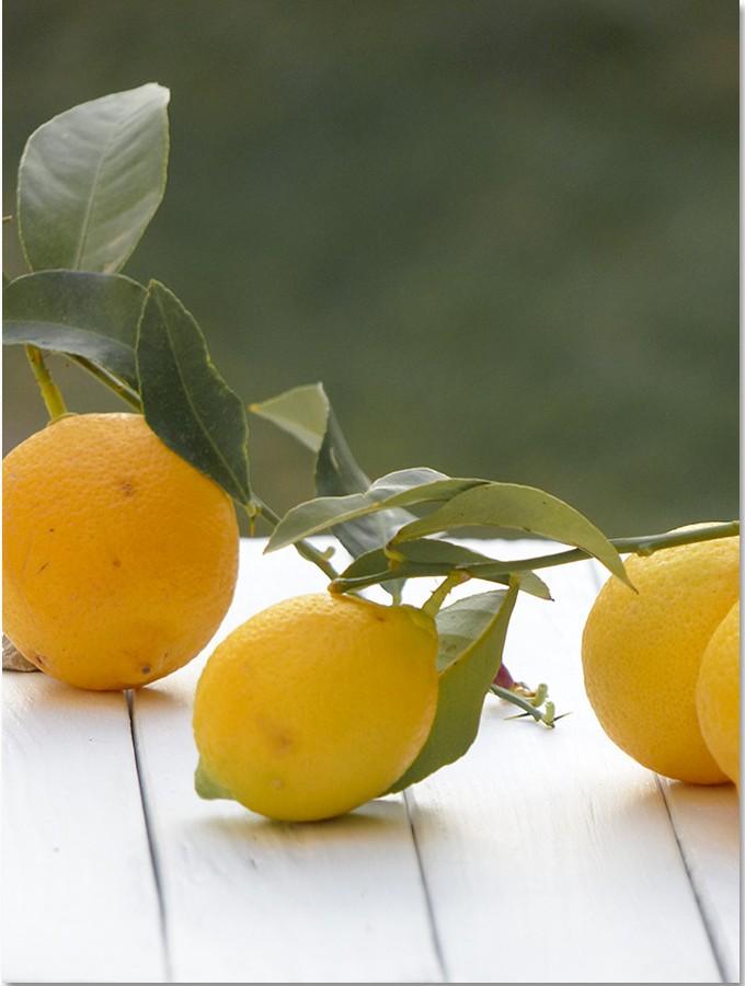 Le citron (Citrus limon L.)