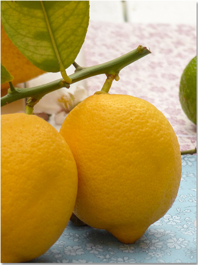 Histoire du citron