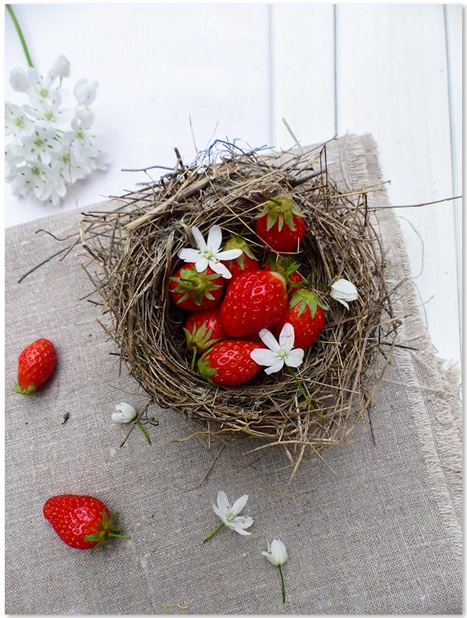 La fraise ( Fragaria )