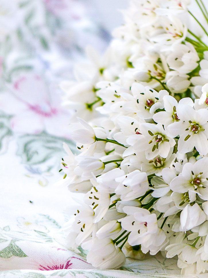 fleurs d'ail des ours