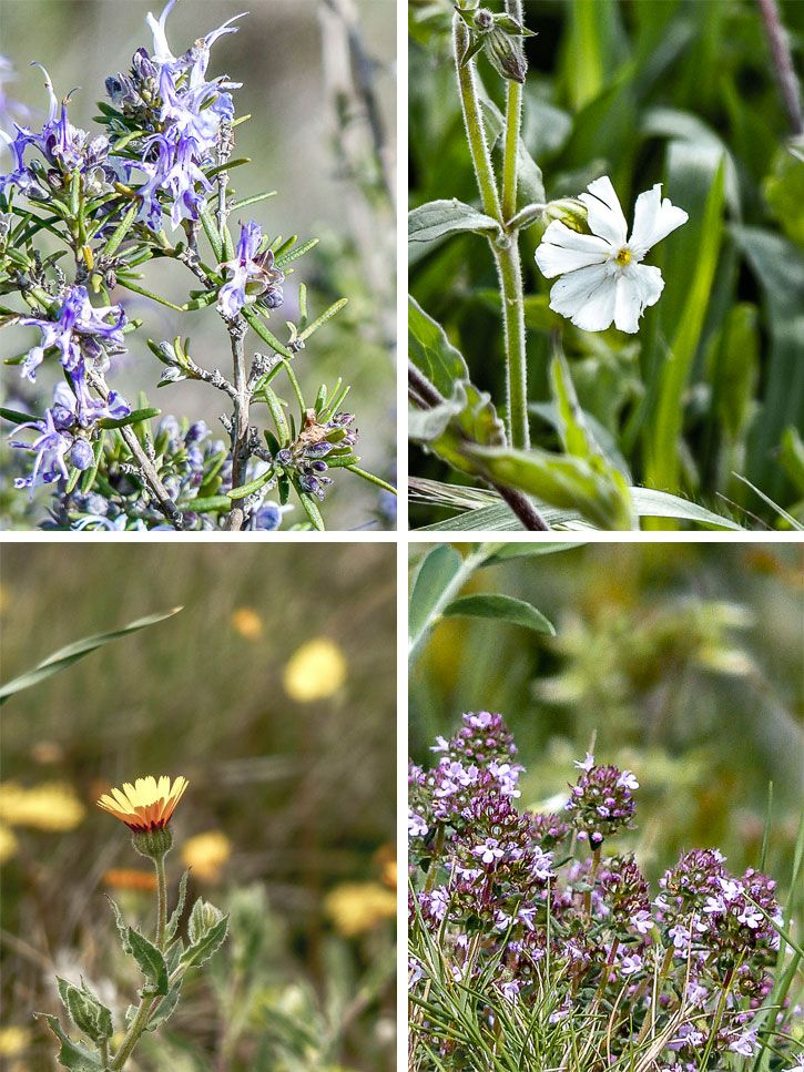 Fabuleux Quelques fleurs comestibles à découvrir NJ29