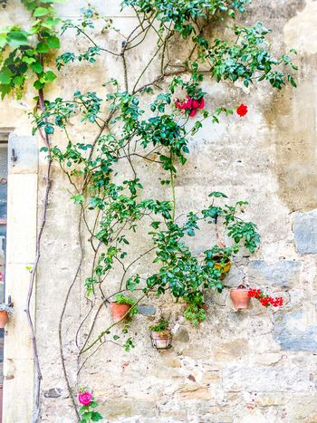 Du sentier sculpturel de Mayronnes à Lagrasse